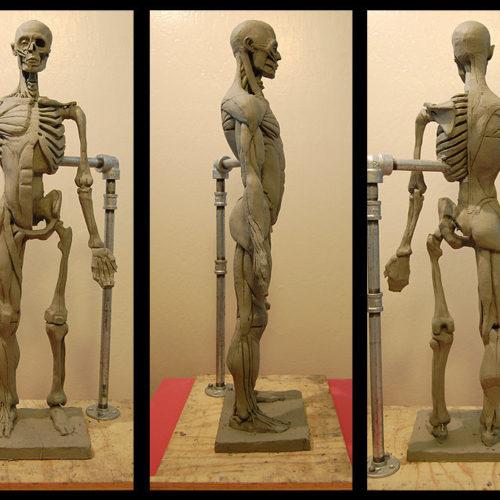 boetseren anatomie 1